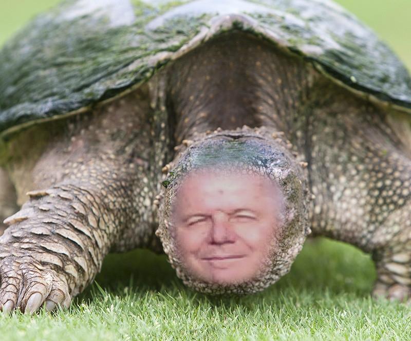 alf tartaruga